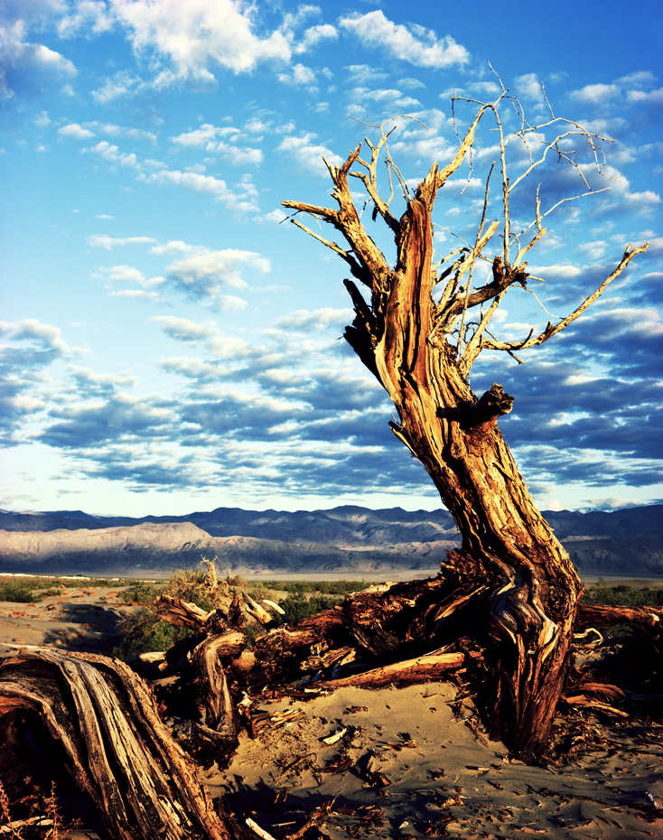 death-valley-colour tree